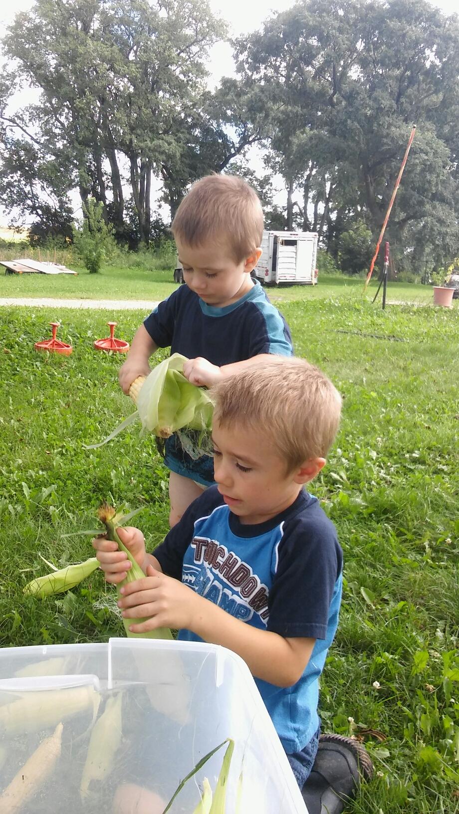 kids husking ears of corn